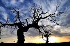 Dead tree. And dramatic sky Royalty Free Stock Photo