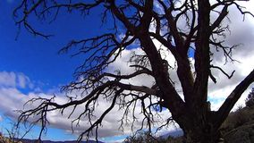 Dead Tree and Drifting Clouds 2 California. Dead Tree and Drifting Clouds 2 Palm Desert California stock video