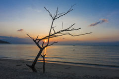 Dead Tree Driftwood and Sunset beach Royalty Free Stock Image