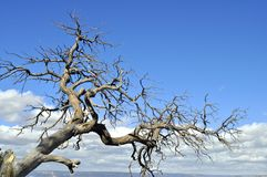 Dead tree. Dry tree on blue sky background Royalty Free Stock Photos