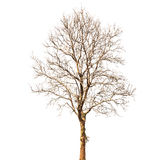 Dead tree stock image