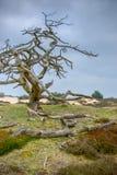 Dead tree Stock Photos