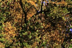Forest walk in autumn with setting sun royalty free stock photography