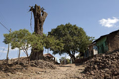A dead tree, Ethiopia Stock Photography
