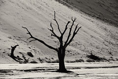 Dead tree in famous Deadvlei Royalty Free Stock Images