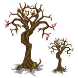 Dead tree with few flowers. Symbol of rebirth Stock Images