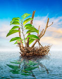 Dead tree floating in the sea Royalty Free Stock Photo