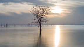 Dead tree with flock of birds in the lake at Pakpra. Dead tree with flock of birds in the lake at Pakpra, Phatthalung, Thailand Royalty Free Stock Photos