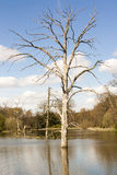 Dead tree in flood. A dead tree standing in the middle of a food stock image