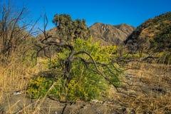 Dead Tree Flowering Bush Stock Photography