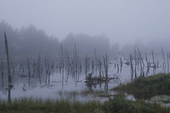Dead Tree Fog. Dead trees in the pond, dark skies and fog give a spooky feel to this August morning Royalty Free Stock Photos