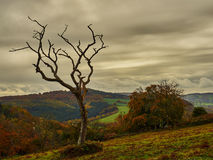 Dead Tree in Foreboding Sky Royalty Free Stock Photos