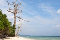 Dead tree in a forest on a beach at Havelock. Royalty Free Stock Photos