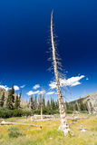 Dead Tree From Forest Fire Stock Photography