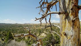Dead tree in front of utah landscape. Video of dead tree in front of utah landscape stock footage