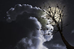 Dead tree in a full moon night Royalty Free Stock Photos
