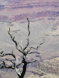 Dead tree in Grand Canyon Stock Photography