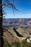 Dead Tree & The Grand Canyon Stock Images