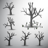 Dead tree on grave yard Royalty Free Stock Images