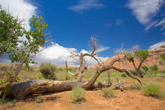 Dead Tree on Ground in Utah Stock Images