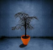 Dead tree growing Royalty Free Stock Image