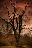 A Dead Tree In Hell. A Dead Tree In Satan's backyard Stock Image
