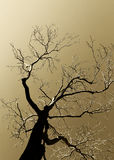 Dead tree, high contrast sepia hue, in backlight Stock Images