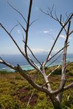 Dead tree on a hill above tahiti lagoon. Tree in foreground Royalty Free Stock Image