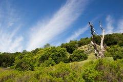 Dead tree and hillside. Stock Photo