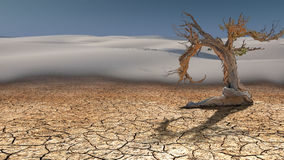 Free Dead Tree In Desert Stock Photography - 23309442