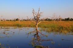 Dead tree island Royalty Free Stock Photo