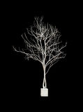 Dead tree isolated on black isolated background with clipping pa Stock Images