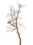 Dead Tree Isolated Stock Images