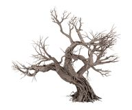 Free Dead Tree Isolated On White Background Royalty Free Stock Photography - 102110637