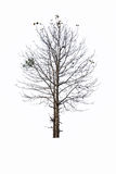 Almost dead tree Stock Photography