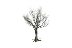 Dead Tree Royalty Free Stock Photography