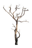 Dead tree isolated on white stock photos