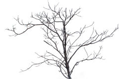 Dead tree isolated on white background Royalty Free Stock Photography