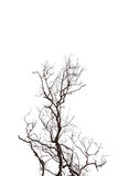 Dead Tree  isolated on white background. Dead Tree  isolated on white background Stock Images