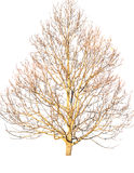 Dead tree isolated on white. Dead tree isolated on white background Stock Photos