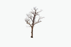 Dead tree isolated on white background. Dead tree isolated on white abstract background Royalty Free Stock Image
