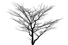 Dead tree isolated on white background. With clipping path Royalty Free Stock Images