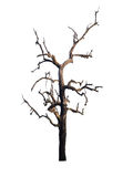 Dead tree isolated on white background. Clipping path Royalty Free Stock Photography