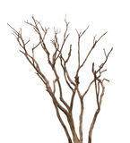 Dead tree isolated on white background. Clipping path Stock Photography