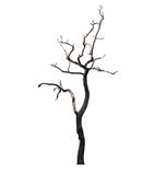 Dead Tree isolated on white background Stock Images