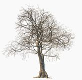 Dead tree isolated on white background. vector illustration
