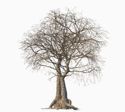 Dead tree isolated on white background. royalty free illustration