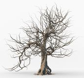 Dead tree isolated on white background. stock illustration
