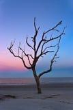 Dead Tree on Jekyll Island. Dead tree on the beach at sunset, Jekyll Island, Georgia, USA Stock Photo
