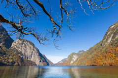 Dead tree and Konigssee lake,Germany Royalty Free Stock Photo